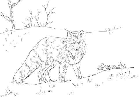 Red Fox In Snow Coloring Page Free Printable Coloring Pages Fox Coloring Page Fox In Snow Coloring Pages