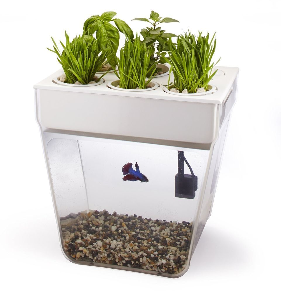 Self Cleaning Fish Tank Garden Aquafarm Self Cleaning Grows Food Fish Tank Herb Garden Hydroponic