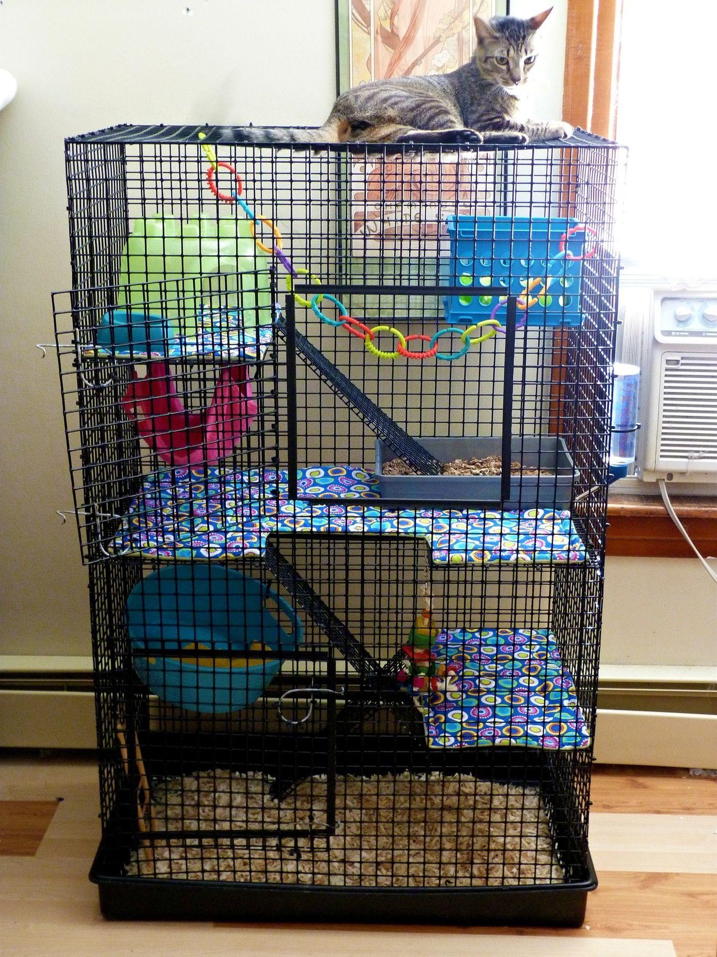 rat cage design google rat cages pinterest rat cage rats and ferret. Black Bedroom Furniture Sets. Home Design Ideas