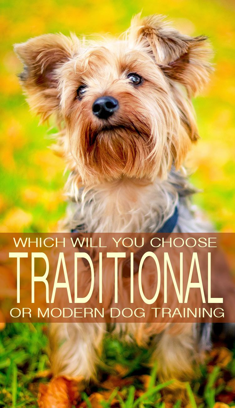 Traditional Dog Training Versus Modern Methods Dog Training