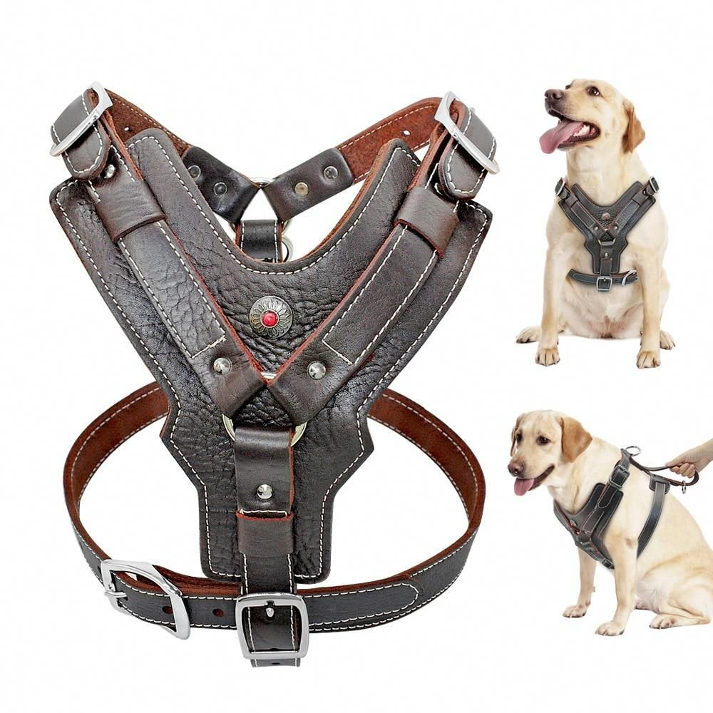 13 Unbelievable Dog Harnesses Lift For Small Dogs Dog Harness Big