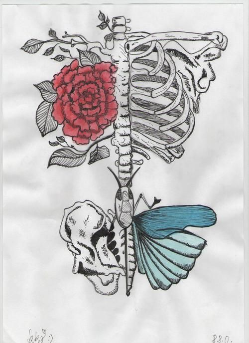 butterfly, draw, drawing, flower, pencil, rose, skeleton ...
