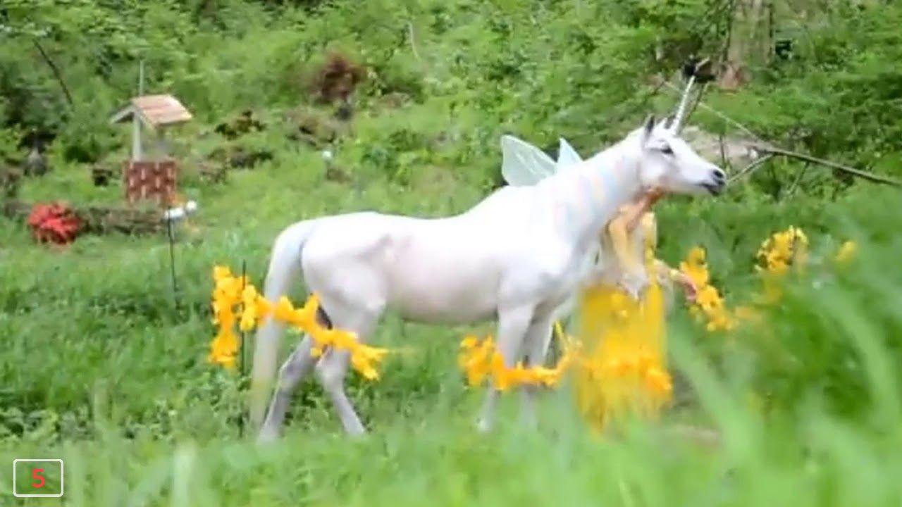 how to catch a unicorn in real life