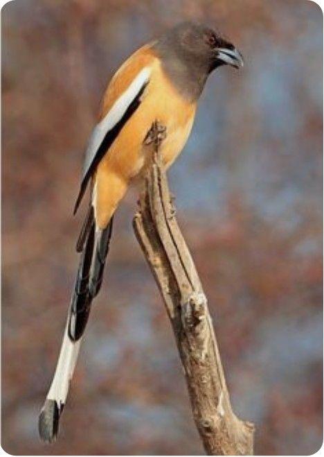 c02a055c Pin de Gabriela Dominguez en AVES | Aves pajaros, Aves bonitas y Aves  hermosas