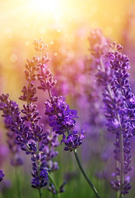 Keep Mosquitoes Away with these Plants ~Fantastic information ~DanaMichele ❤