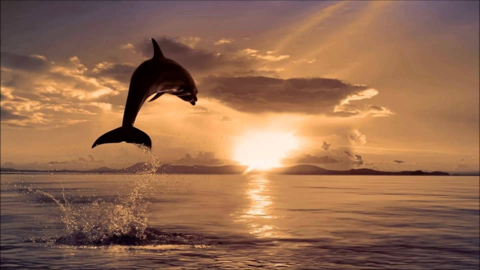 Sunset And Happy & Free Jumping Dolphin | The Amazing Wild ...