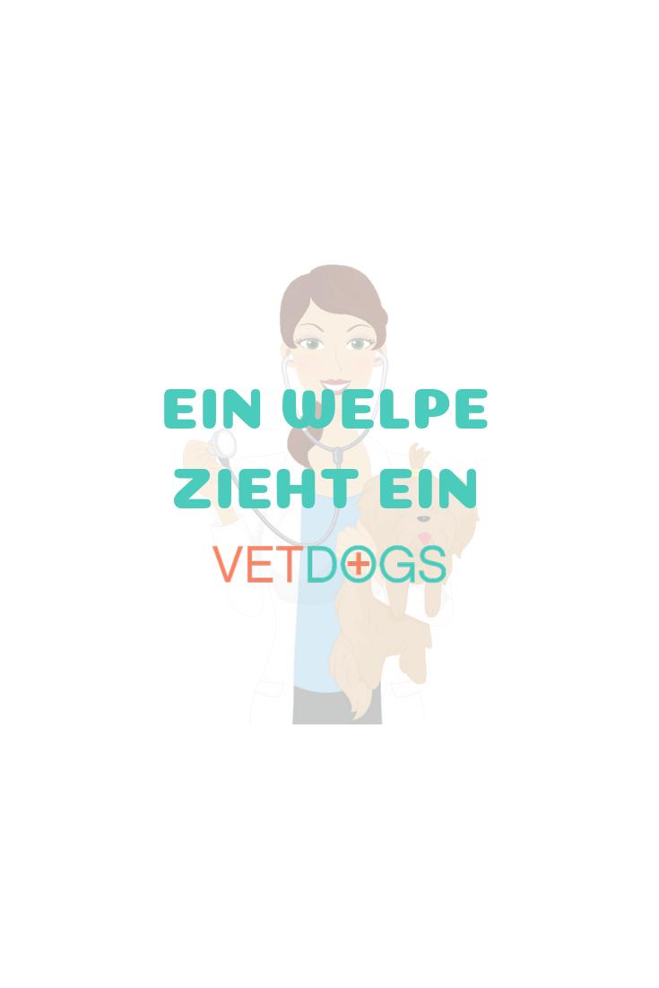 Startseite Hunde Welpen Tierarzt
