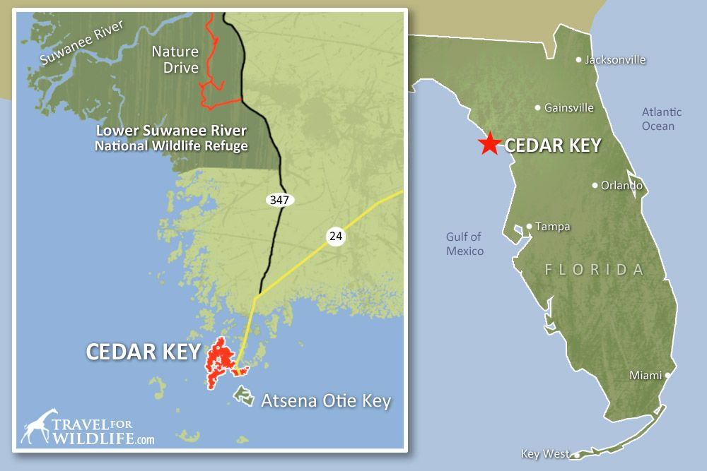 Map Of Where To Kayak With Dolphins And See Wildlife Around Cedar