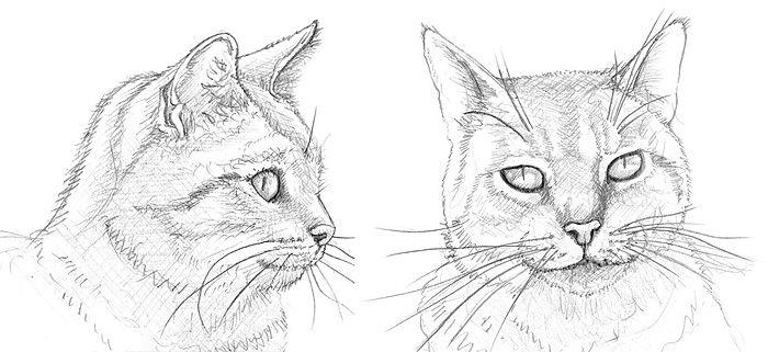 ein katzenporträt zeichnen lernen  katze zeichnen katze