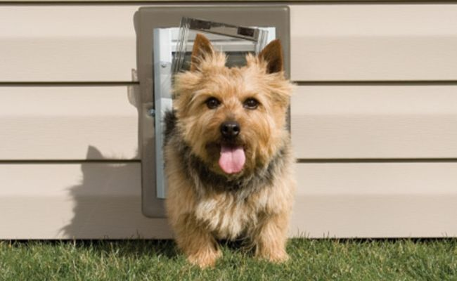 The Main Reason To Get One Of The Best Dog Doors For Your Home Is If