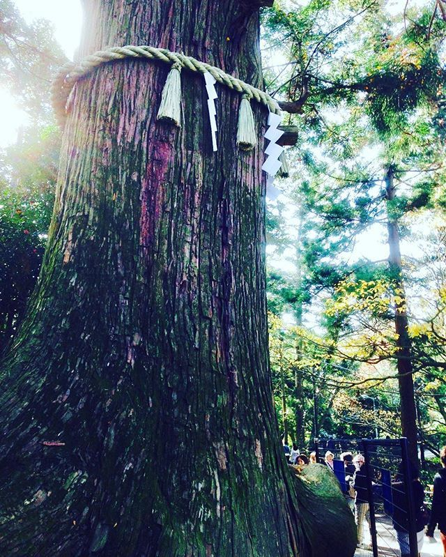 Instagram media by chen.weichueh - 🌲🌲🌲 #旅行日記#旅行写真#旅行大好き#八王子市#高尾山#たかおさん#登山道#☀️#sunlight #mounttakao#takao#Tokyo#Japan#hachioji#travel#travelphotography