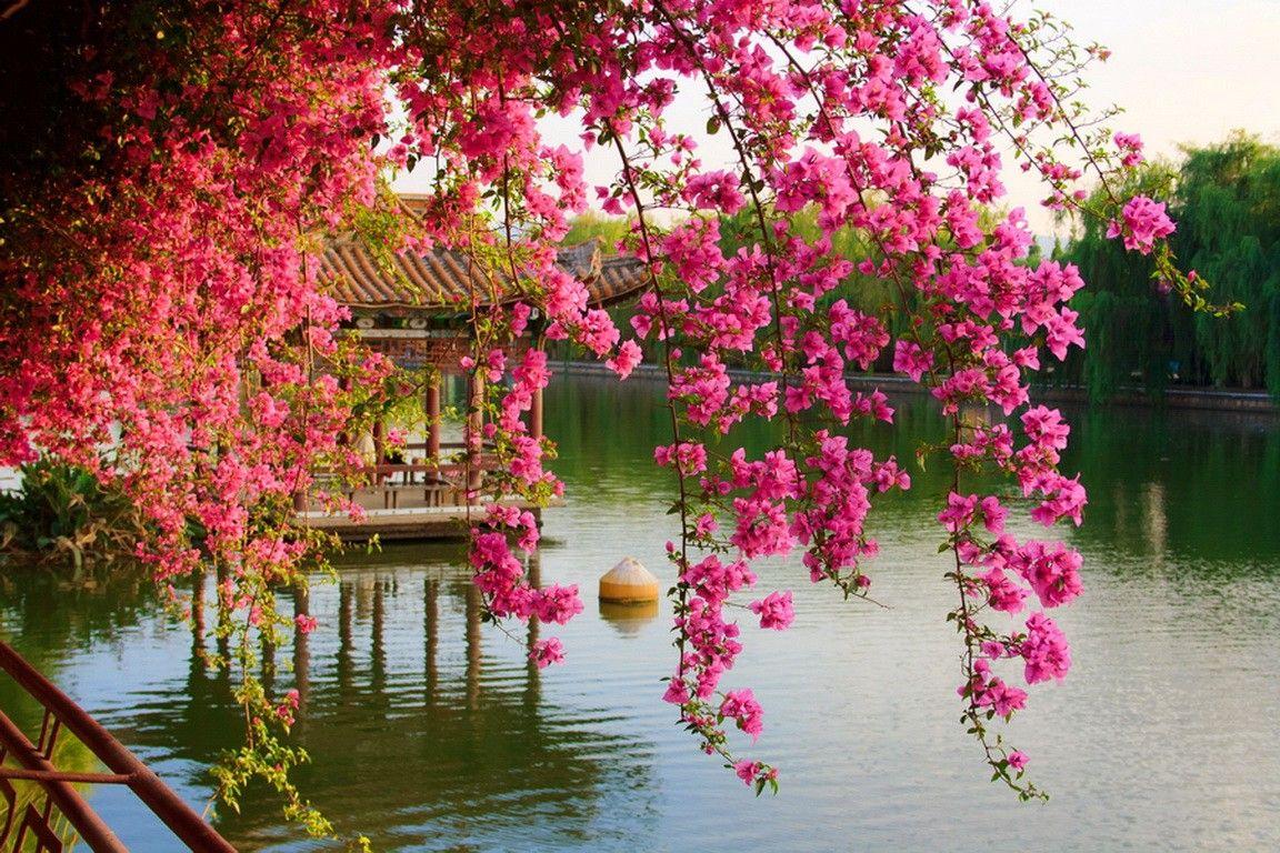 Image result for japanese flowers japan in pinterest