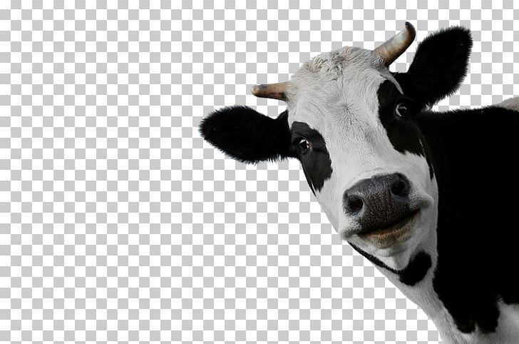 Cow PNG - Free Download