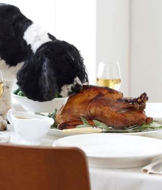 Turkey Cooked Poultry Bones Can Easily Break And May Get Stuck In