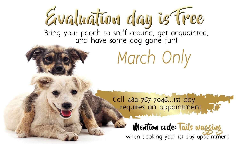 Pin On Dog Daycare