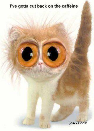 Sometimes I wish my cat liked caffeine. | Coffee Buzzed ...