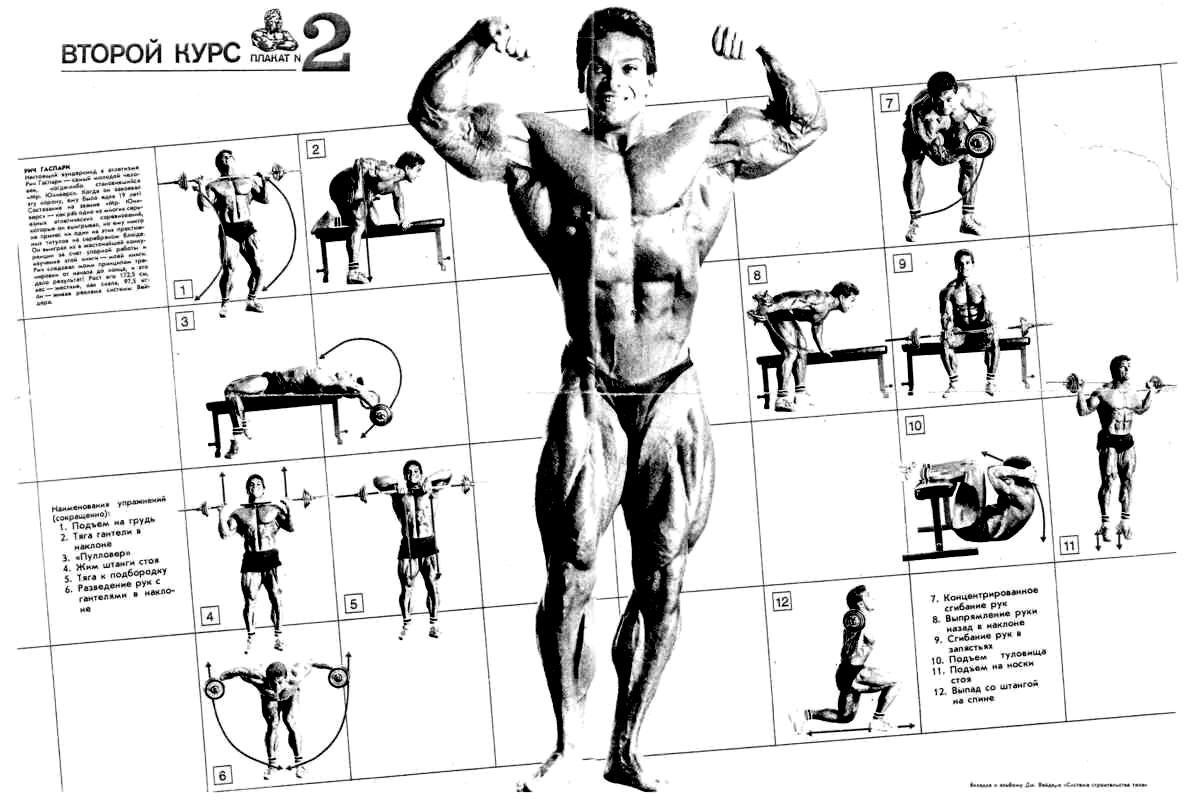 документ тренировочный курс бодибилдинга с картинками никого