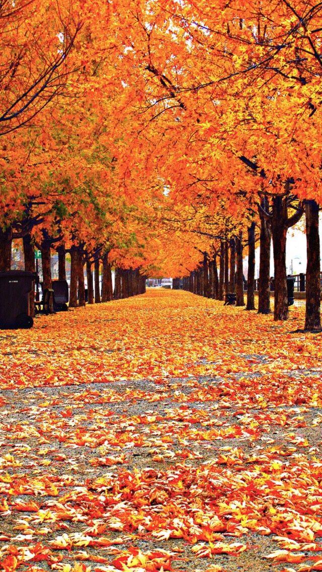 Autumn Fall Trees Iphone Wallpaper Autumn Scenery Fall Wallpaper Autumn Trees