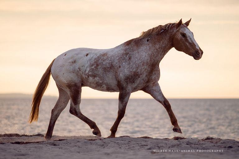 Animal Equine Equus Fine Art Horse Horse Photography Pferd
