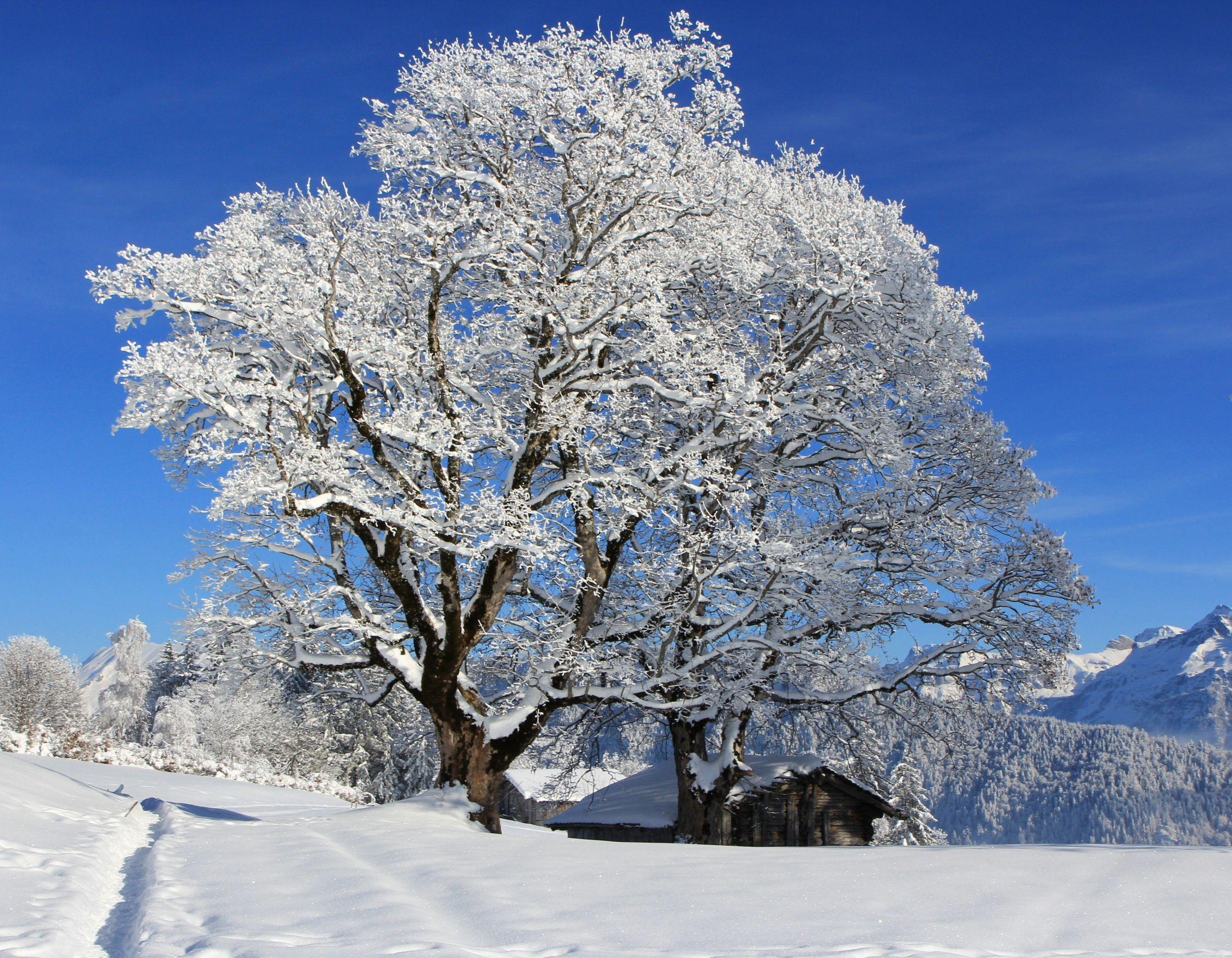 Fonds D Ecran Saison Hiver Neige Arbres Nature Image 405709 Telecharger Photo Arbre Arbre Paysage Avec Maison
