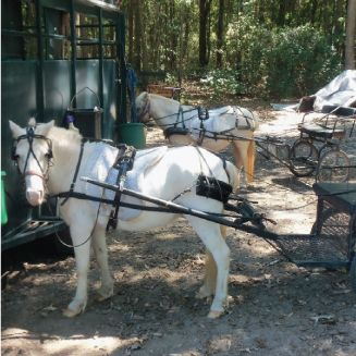Help us get the Disable in the Field with Us!  Our non profit organization is asking for both financial support and technical expertise in creating disabled pony carts.  Re Pin and Help our Cause Get Heard!