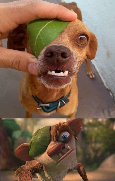 Photo of Lustigste Tier-Meme des Tages, die extrem witzig sind (12 Bilder) – Seite 2 … – Carola
