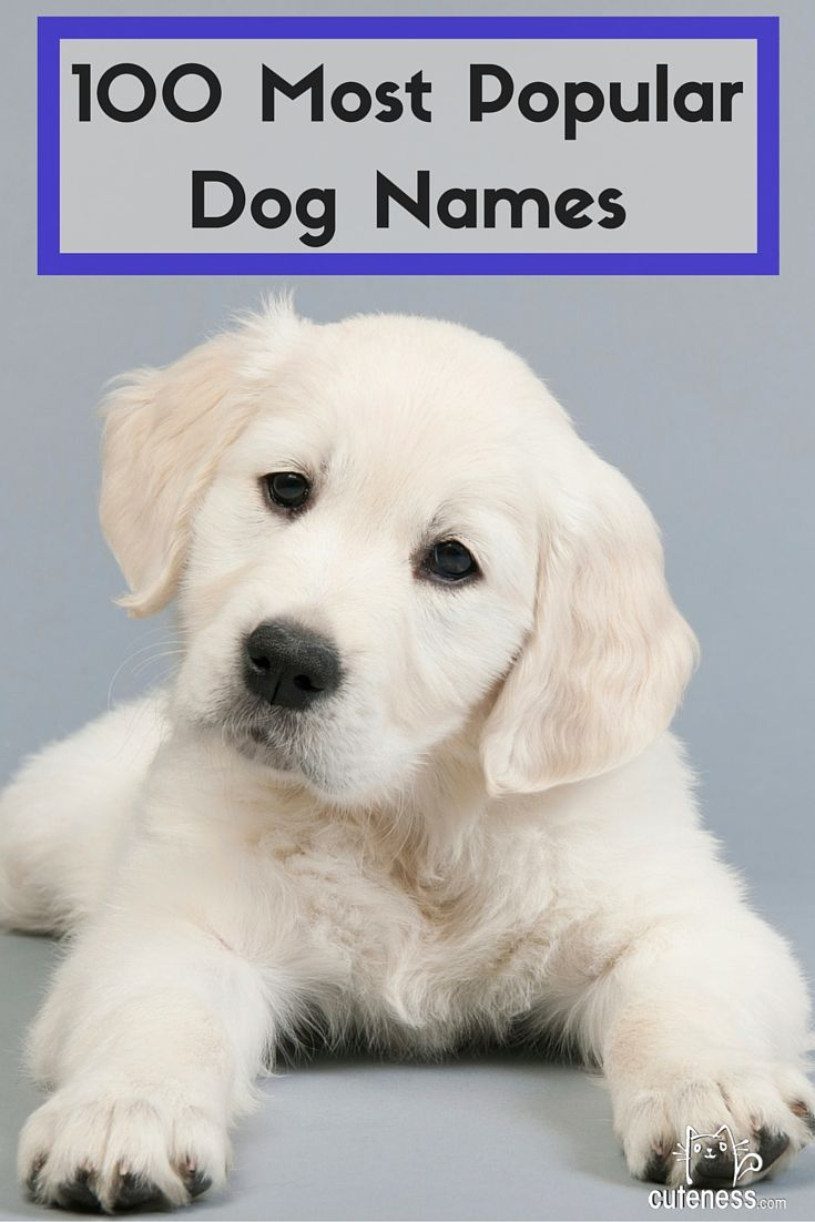 The 100 Most Popular Dog Names Is Your Dog S Name On The List