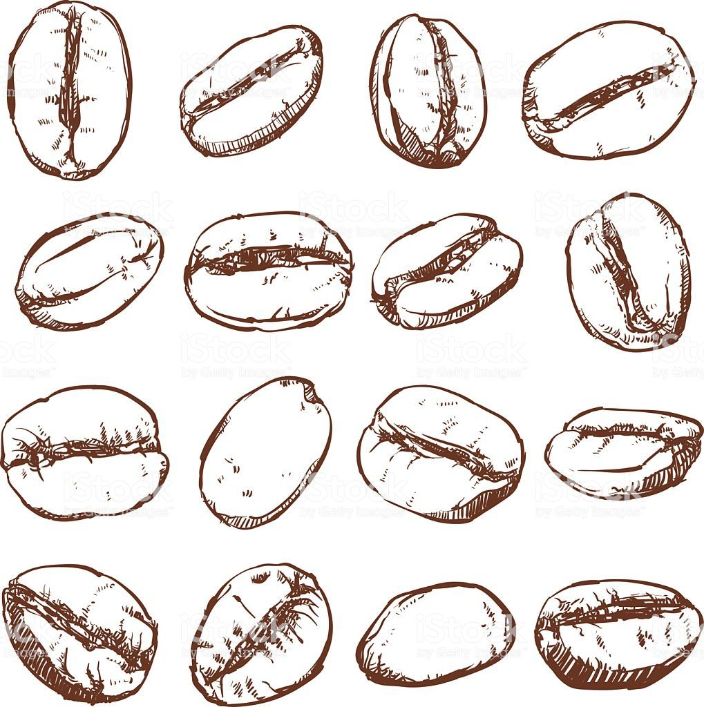 Coffee bean Isolated Hand drawn vector, sketch of coffee