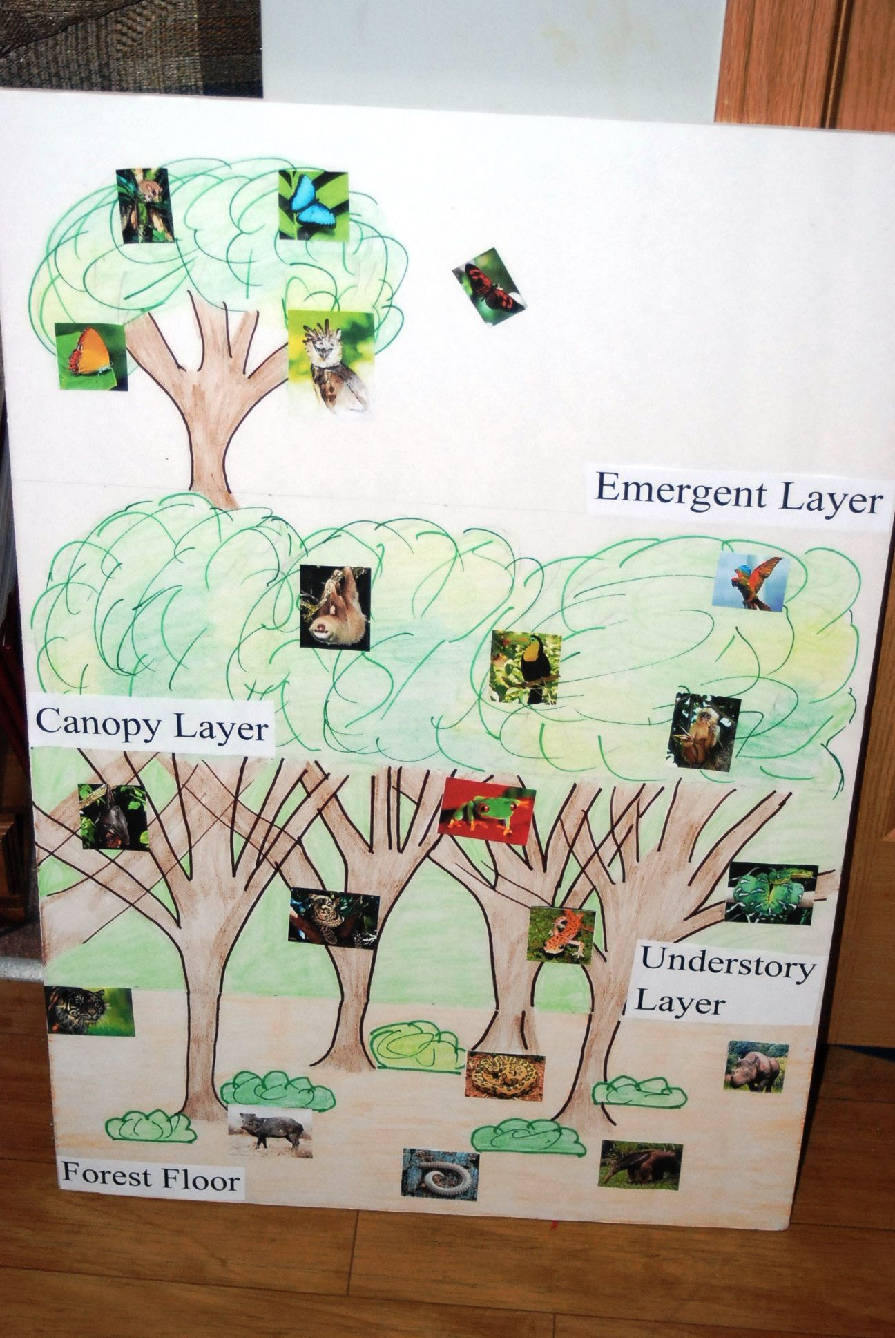 Rainforest Poster I Created Outline Kids Colored In Labeled