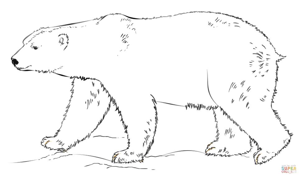 Polar Bear Walking Coloring Page Free Printable Coloring Pages Polar Bear Coloring Page Polar Bear Color Bear Coloring Pages