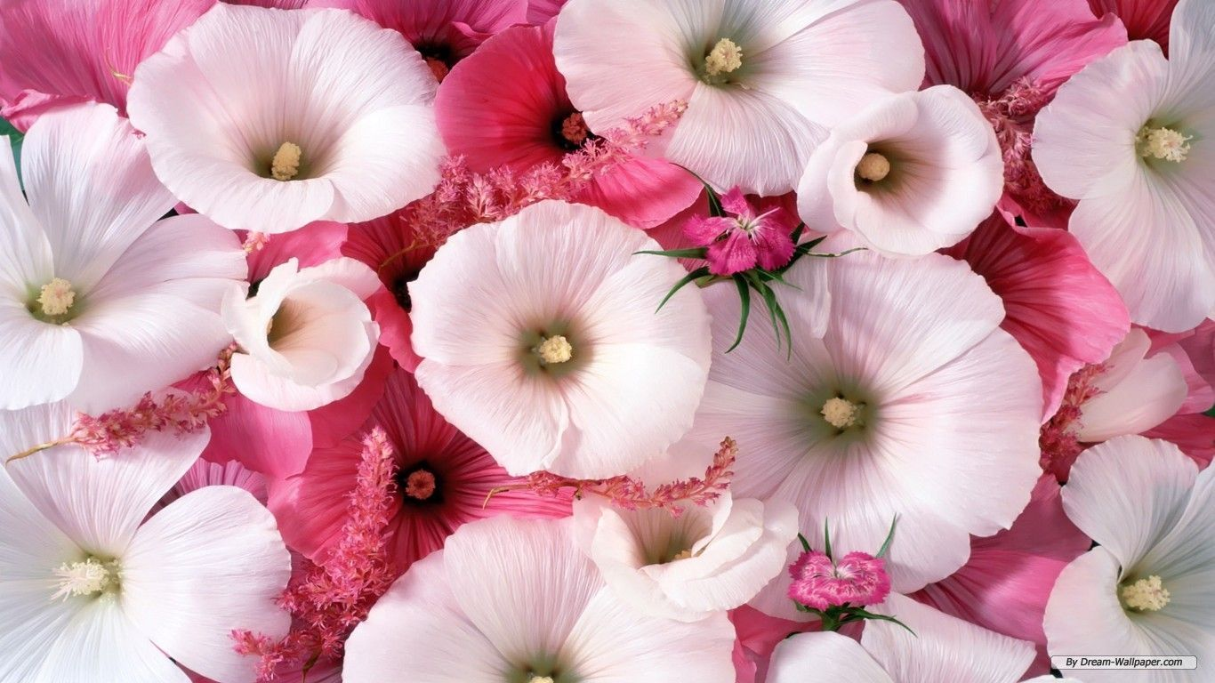 Pictures Of Beautiful Flowers Wallpapers Wallpaper Cave All