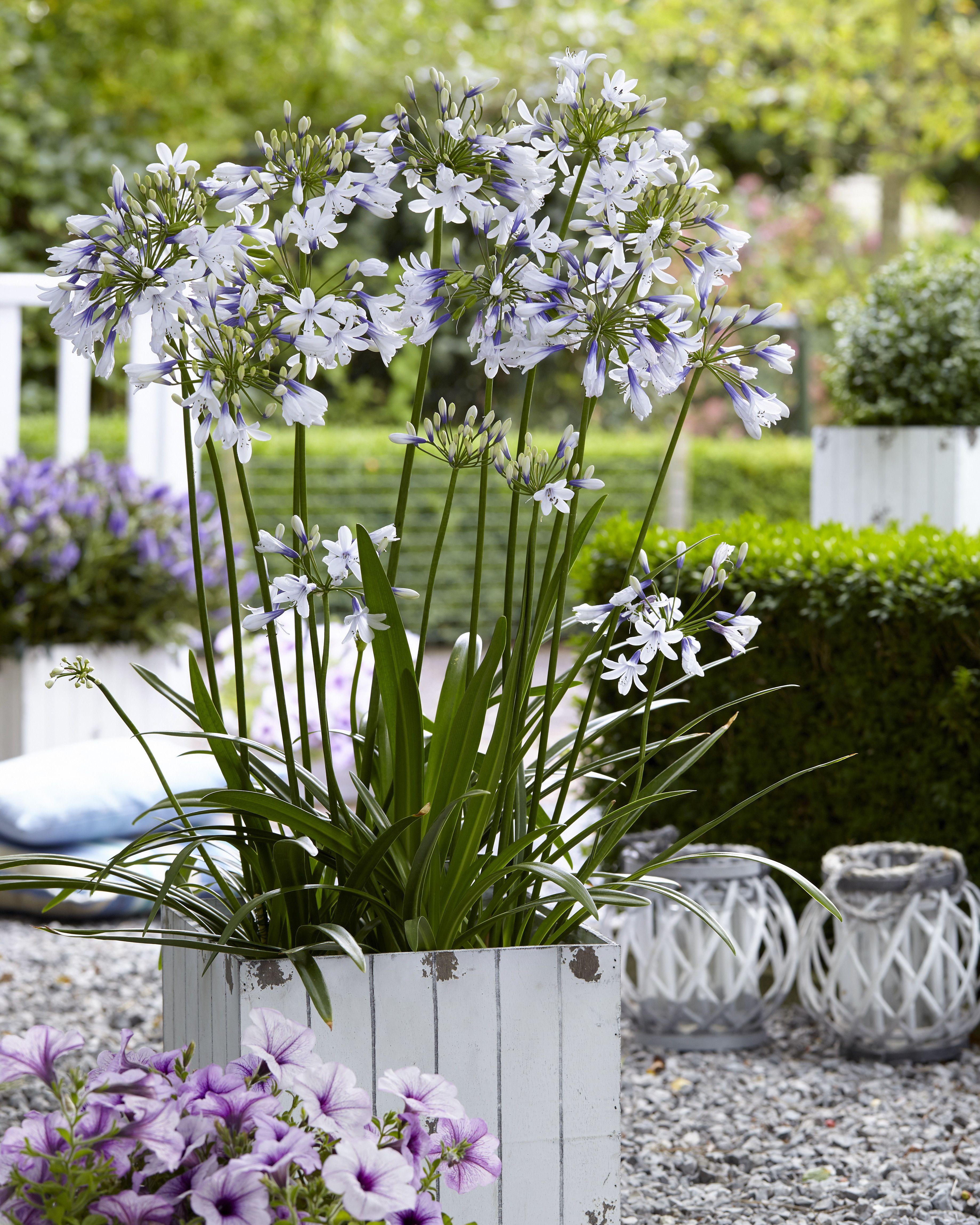 Pin von sarah auf b ume blumen pflanzen wiesen for Garten pflanzen blumen