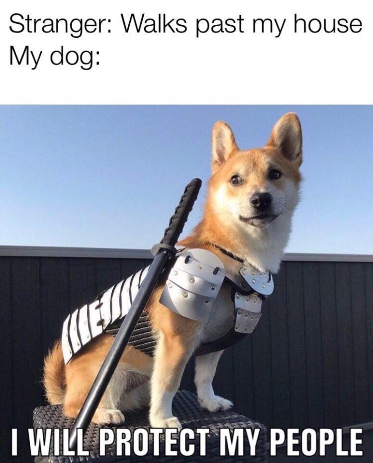 29 Funny Memes Clean So True Hilarious 7 Crazy Funny Memes Funny Pictures Funny Animal Memes