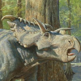 A herd of Kosmoceratops dinosaurs grazes among the cypress trees 76 million years ago in a primeval swamp in what is now southern Utah. Image: Illustration by James Gurney