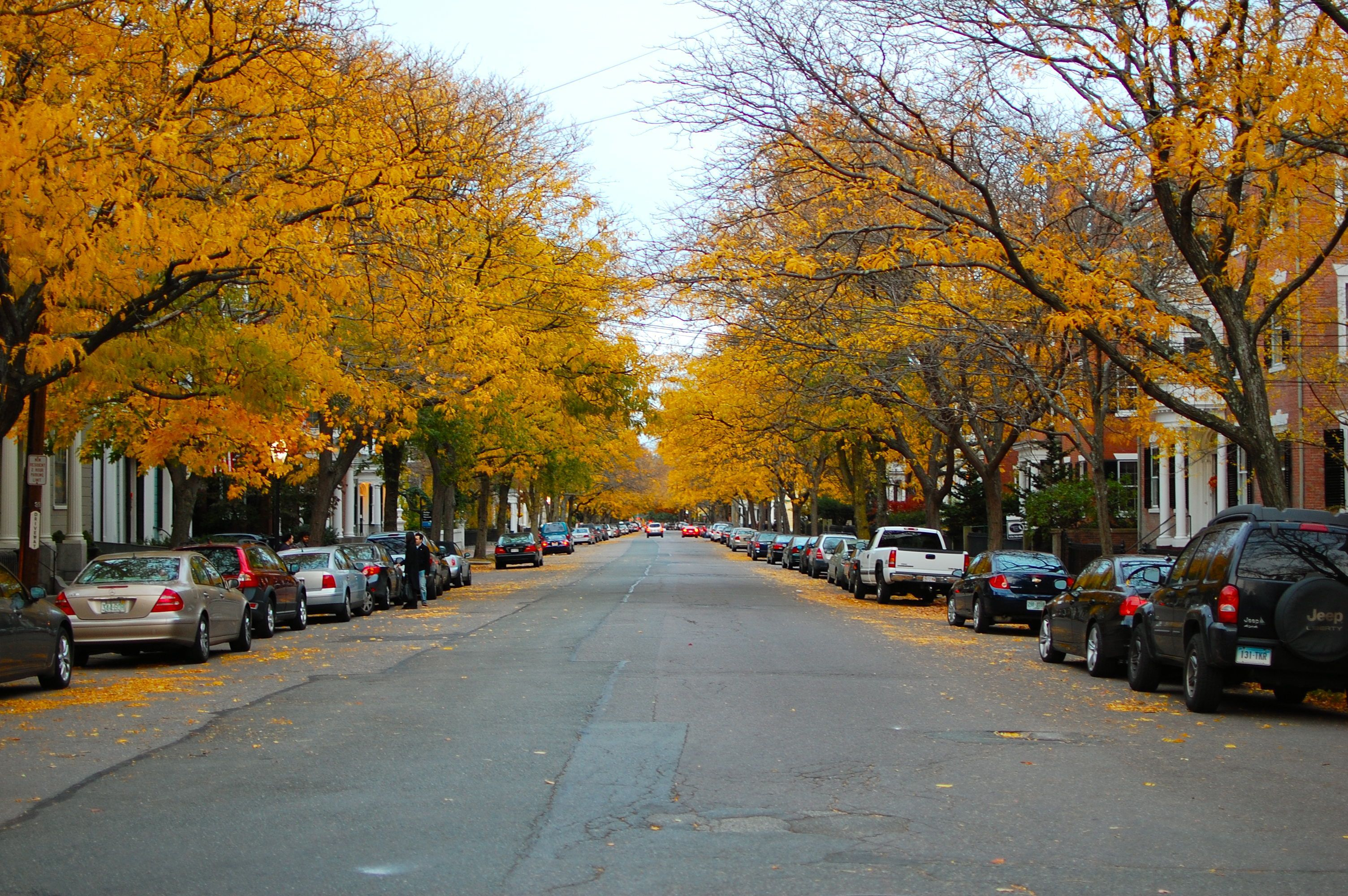 Chestnut Street Named One Of The Most Beautiful Streets
