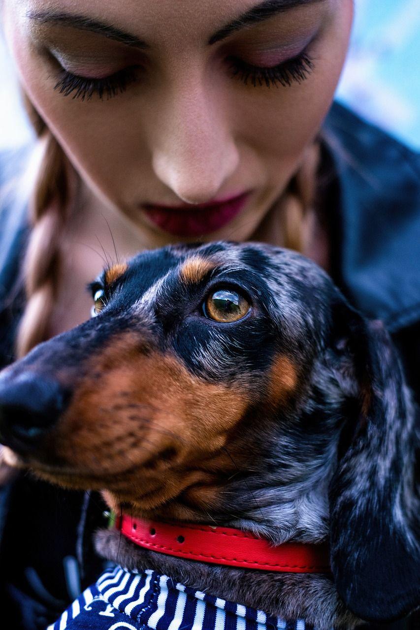 Travel Best Friend Dachshund Dog Girl Travel Bestfriend