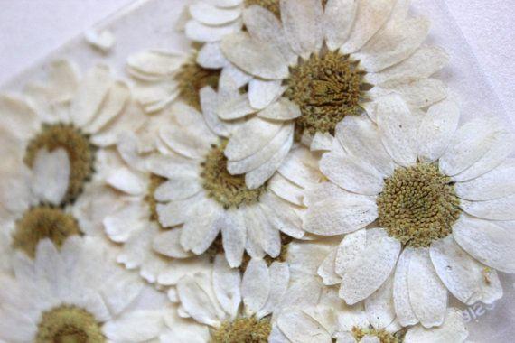 Daisy Flowers Delicate Petal for wedding decor by lemonseedandco, $3.50