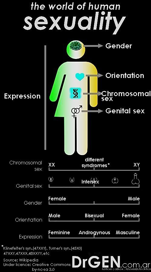 Pin On Infographic Essay Sexuality