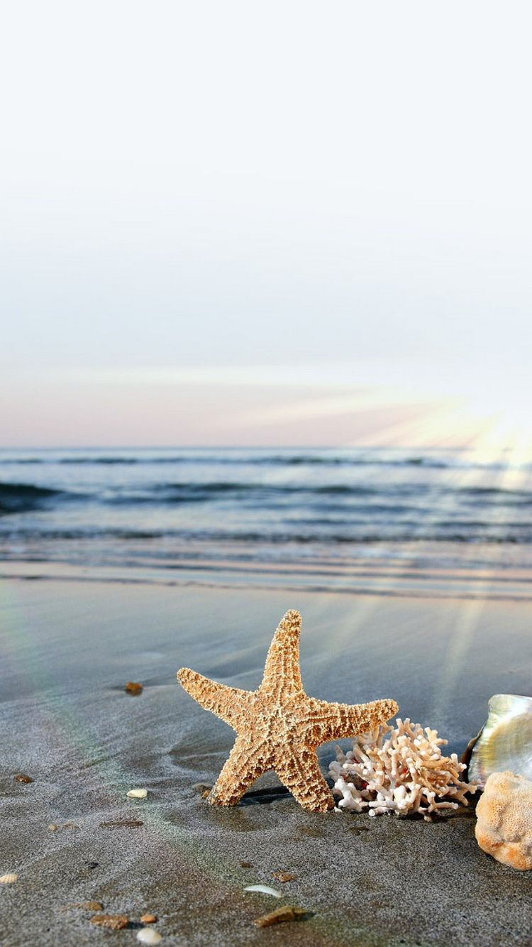 Starfish Sun Waves Beach IPhone 6 Wallpaper