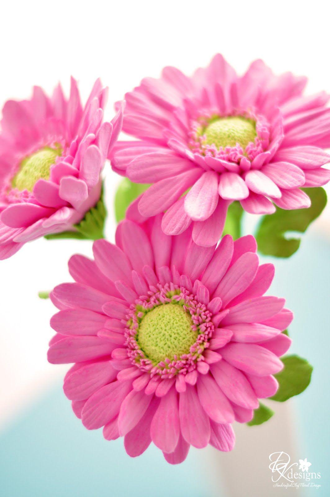 Dk Designs Flores Pinterest Gerbera Sugar Flowers And Flowers