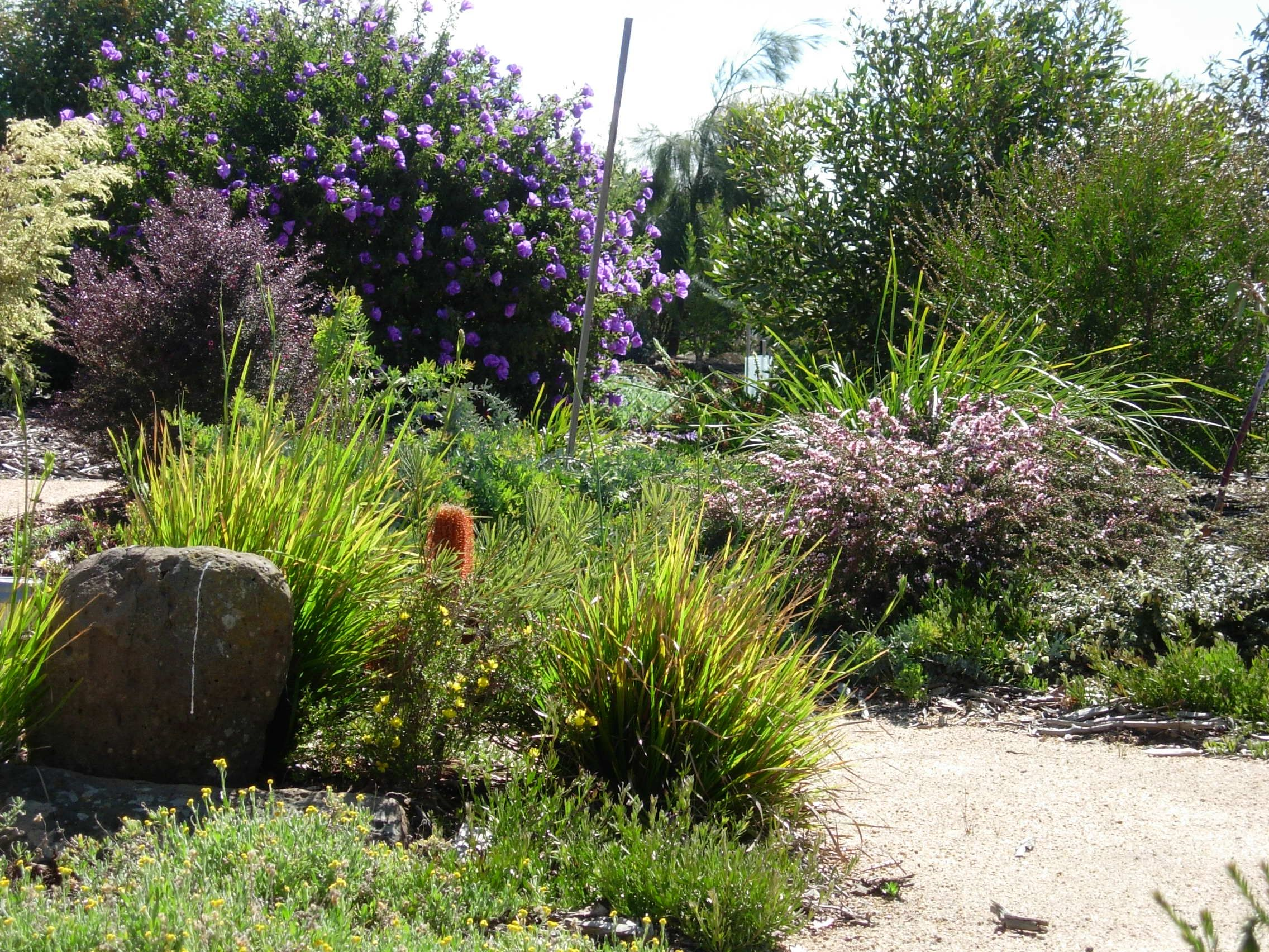 Stunning Australian Native Garden Design Ideas Landscape Designs