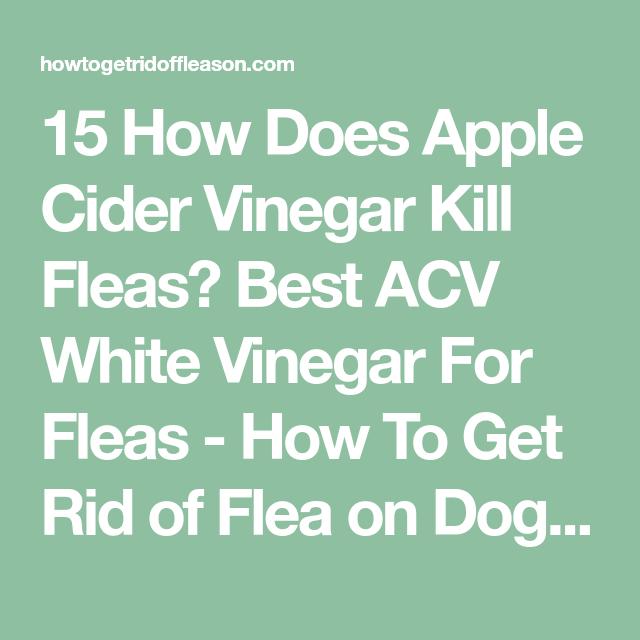 15 How Does Apple Cider Vinegar Kill Fleas? Best ACV White