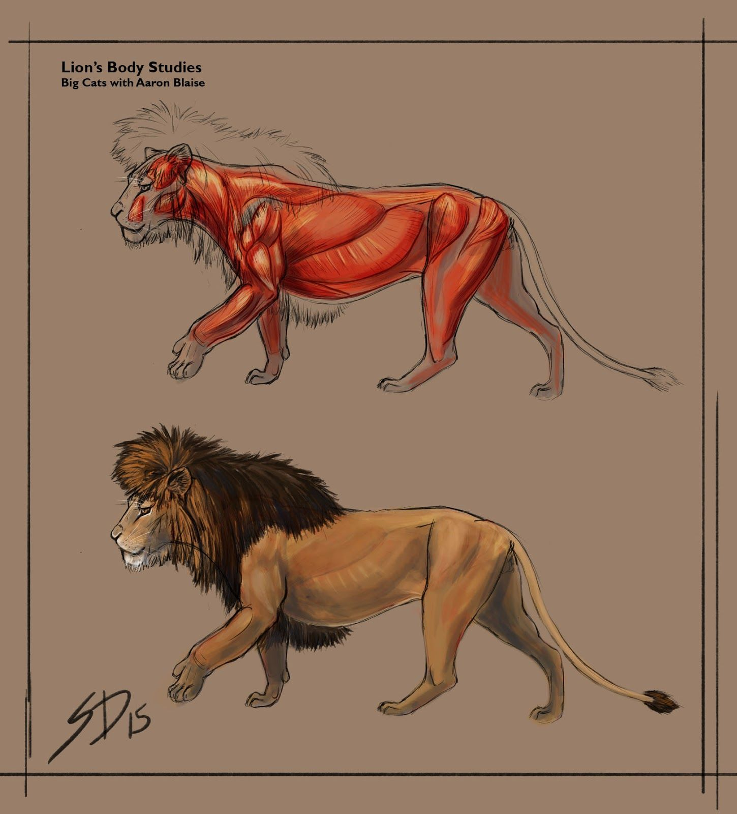 Image result for lion muscle anatomy | Lion Studies | Pinterest ...