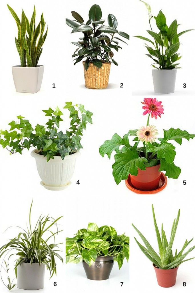 Spring Cleaning Air Filtering Houseplants Cubesmart Self Storage Small House Plants Small Indoor Plants Houseplants