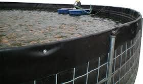 resultado de imagen para cria de peces en tanques