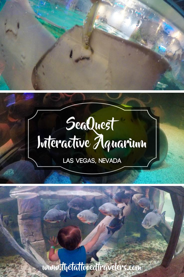 Seaquest Interactive Aquarium Las Vegas Nevada Www Thetattooedtravelers Com Things To Do Bucket List Travel Guide Travel Tips Destinations