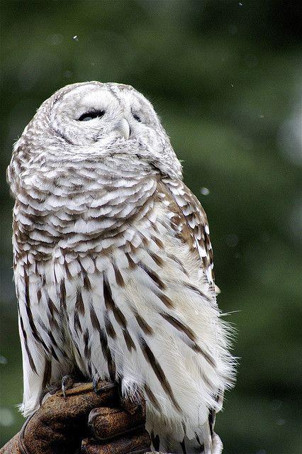 Dsc00649 1 Woodland Park Zoo Owl Animals Beautiful