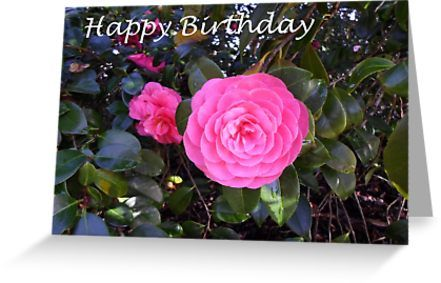 Happy birthday camellia 1 greeting card by keksworkroom happy happy birthday greetings for your flower loving friend or family member also buy m4hsunfo
