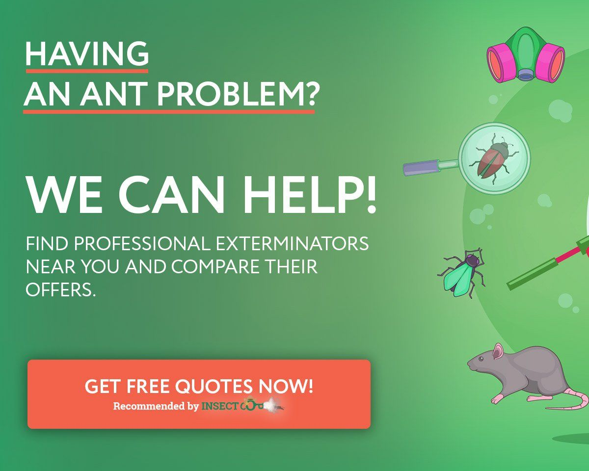 Outdoor Plants That Repel Ants Insect Cop Mice Repellent Getting Rid Of Rats Pest Control