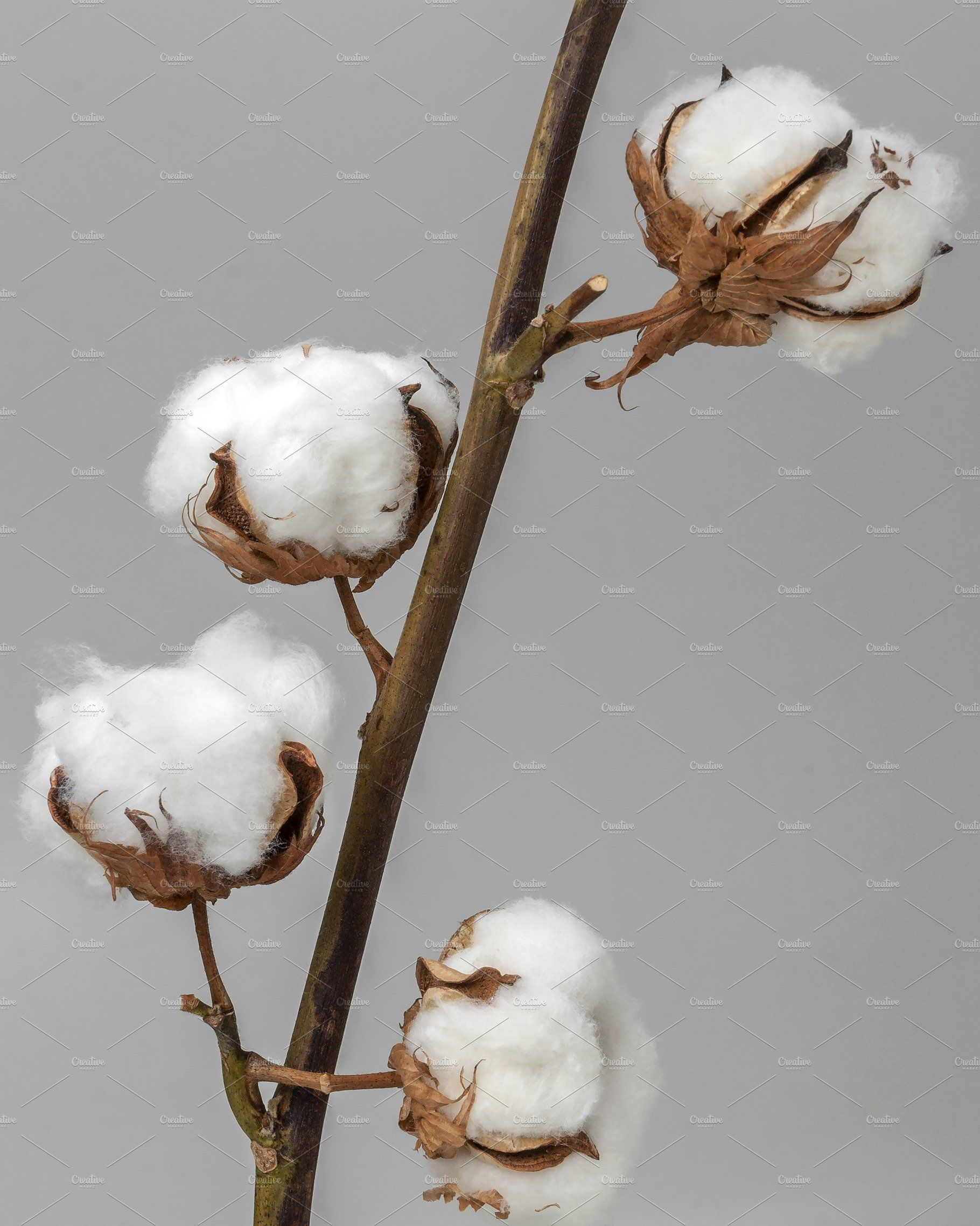 Cotton это купить ткань 95 хлопка 5 эластан